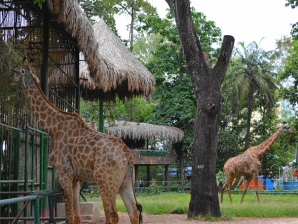 saigon zoo botanical gardens mobile 6 - Saigon Zoo And Botanical Gardens Price